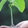 Plant Preservative Mixture: producto fitosanitario